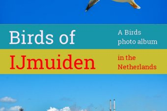 IJmuiden, the birds of fort IJmuiden – The Netherlands