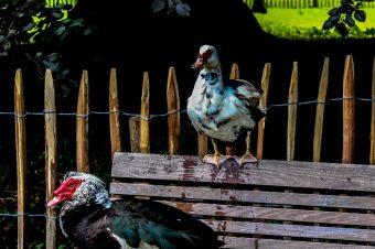 Birds of Mechelen – Belgium