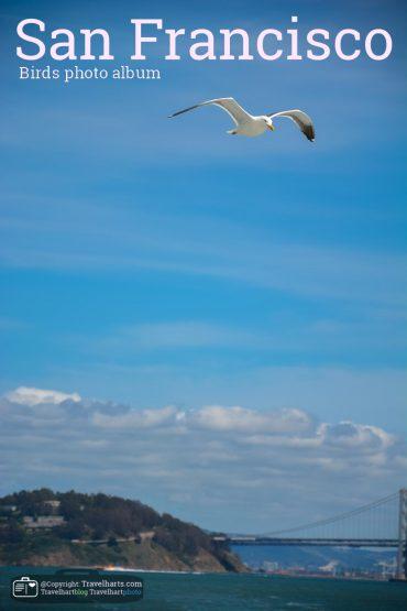 San Francisco, Birds – USA