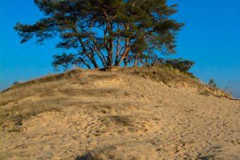 Kootwijkerzand, The biggest sand drift of Europe – The Netherlands