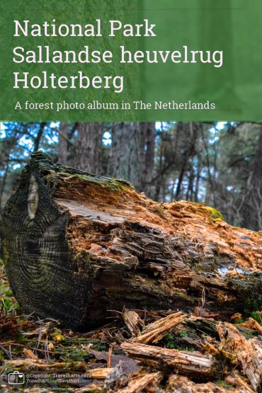 Sallandse Heuvelrug, hike on the Holterberg – The Netherlands