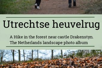 Utrechtse Heuvelrug, forest near Castle Drakesteyn – The Netherlands