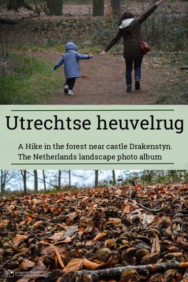 Utrechtse Heuvelrug, forest near Castle Drakesteyn – The Netherlands