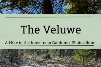 The Veluwe, the forest near Garderen – The Netherlands