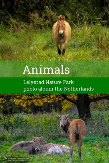 The Animals of Lelystad Nature Park – The Netherlands