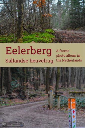 Sallandse Heuvelrug, hike on the Eelerberg – The Netherlands
