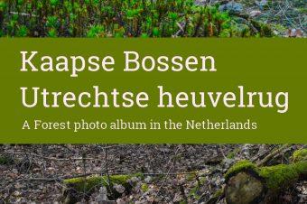 Utrechtse heuvelrug, Kaapse bossen – The Netherlands